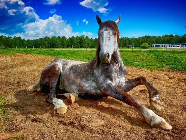 horse-2572051_1920